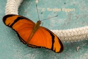 13_171218_DSC1361_Schmetterling
